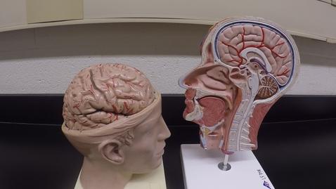Thumbnail for entry Brain Models