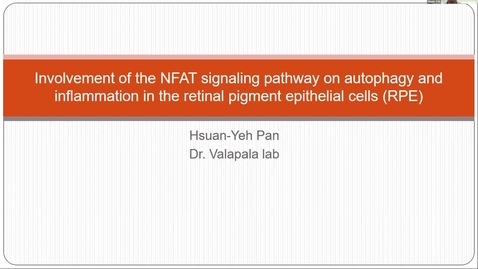 Thumbnail for entry Involvement of the NFAT signaling pathway on autophagy and inflammation in retinal pigment epithelial (RPE) cells