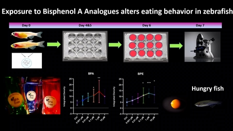 Thumbnail for entry Exposure to bisphenol A analogues alter eating behavior in zebrafish