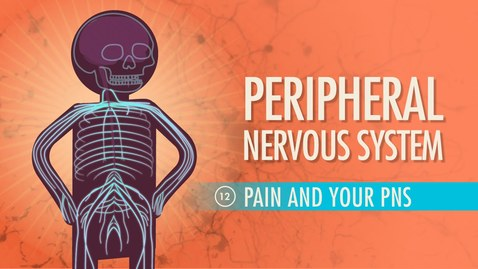 Thumbnail for entry Peripheral Nervous System: Crash Course A&P #12