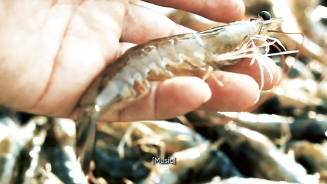 Thumbnail for entry Spotlight: Sustainable shrimp for a sustainable future