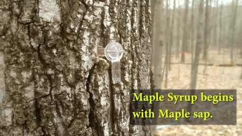 Thumbnail for entry How to make maple syrup