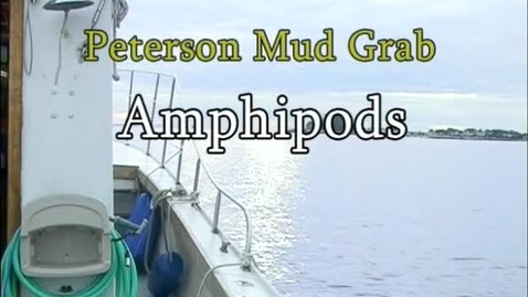Thumbnail for entry Amphipods (Module 3)