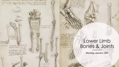 Thumbnail for entry Lower Limb Bones and Articulations