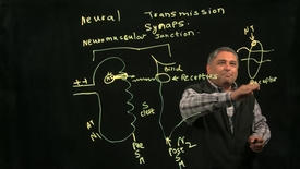 Thumbnail for entry Biology of Addiction: Neuro-transmission at the synapse
