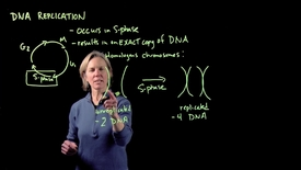 Thumbnail for entry DNA Replication – Part I