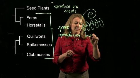 Thumbnail for entry Vascular Plants: Overview