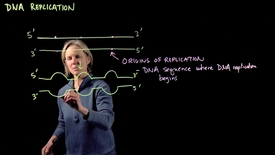 Thumbnail for entry DNA Replication – Part II