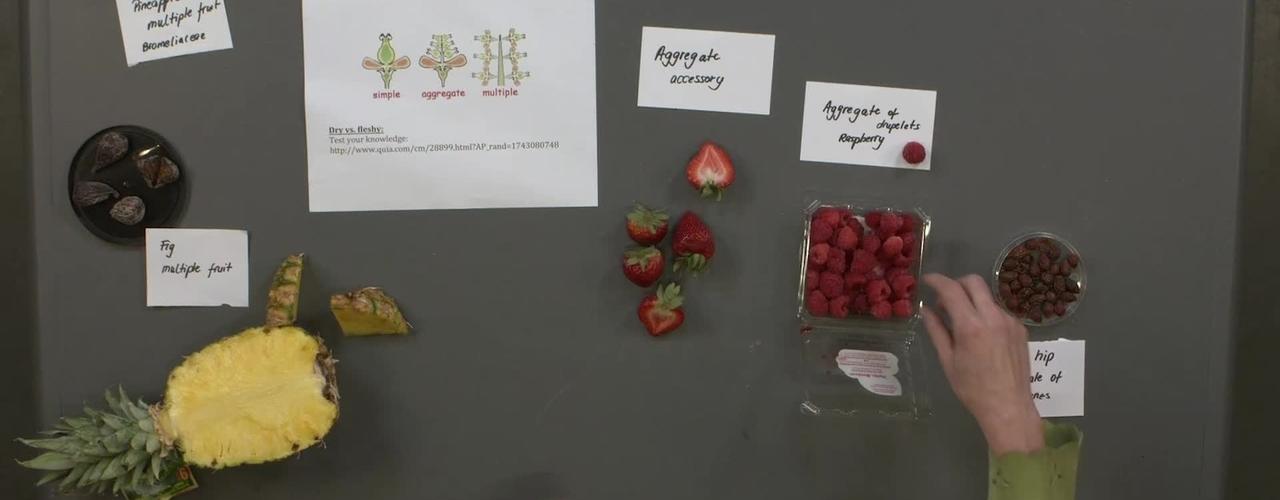 Reproductive Morphology: Live Fruits, Aggregate and Multiple Fleshy