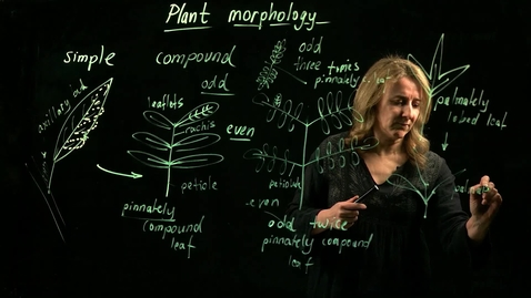 Thumbnail for entry Plant Morphology (Part II)