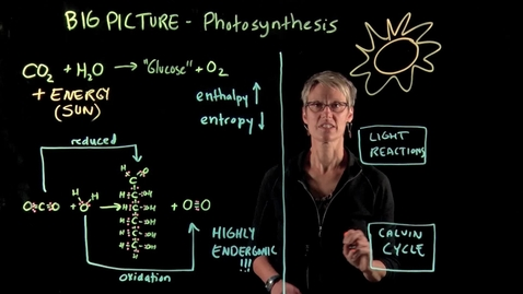 Photosynthesis – The Big Picture