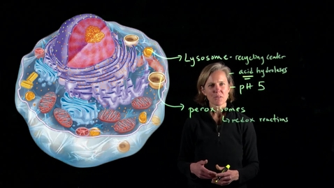 Thumbnail for entry Eukaryotic Cells and Organelles