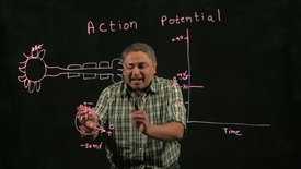 Thumbnail for entry Biology of Addiction: Action Potential