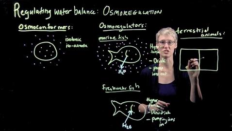 Thumbnail for entry Osmoregulation