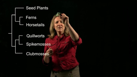 Thumbnail for entry Vascular Plants: Ferns and Horsetails