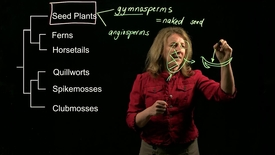 Thumbnail for entry Vascular Plants: Seed Plants