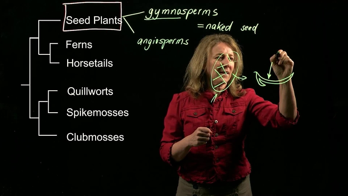 Vascular Plants: Seed Plants