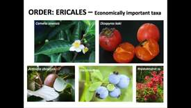 Thumbnail for entry Ericaceae Lecture