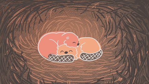 Thumbnail for entry Water is like Learning - A Beaver Metaphor