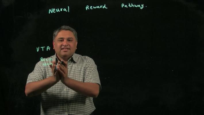 Neural Reward Pathway