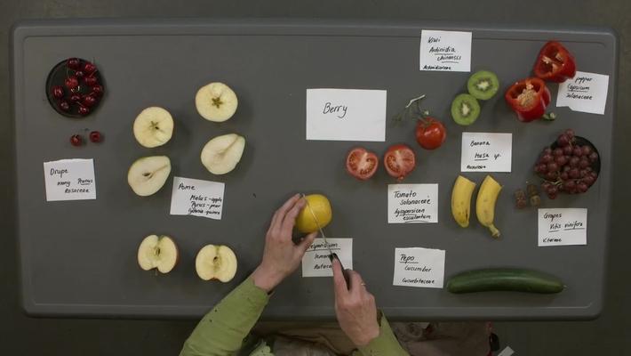 Reproductive Morphology: Live Fruits, Simple Fleshy