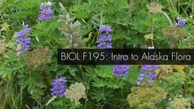 Thumbnail for entry BIOL F195 Welcome to Intro to Alaska Flora