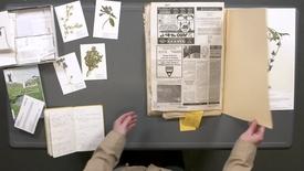 Thumbnail for entry Making Herbarium Specimens: Pressing Plants