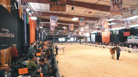 Scottsdale Arabian Horse Show and Day 6 Highlights