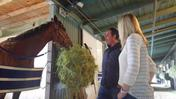 Phil D'Amato Shedrow Stroll: Getting to Know Graded Stakes Winner Air Strike