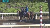Paradise Woods Schooled at the Gate on October 30th, 2019 at Santa Anita Park