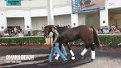 Omaha Beach Schooled in the Paddock at Gulfstream Park on January 11th, 2020