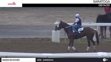 Swiss Skydiver Galloped at Saratoga on August 14th, 2020