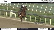 Motivated Seller Worked 4 Furlongs in 49.40 at Palm Meadows on November 28th, 2020