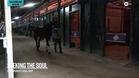 Seeking the Soul Walks the Shedrow at Gulfstream Park in Advance of the Pegasus World Cup