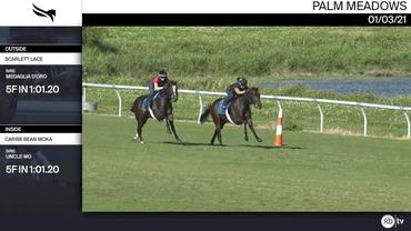 Scarlett Lace (Outside) and Caribe Bean Moka Worked 5 Furlongs in 1:01.20 at Palm Meadows on January 3rd, 2021