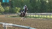 Signalman Hits the Track at Pimlico Race Course on May 15th, 2019