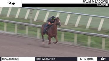 Royal Squeeze Worked 5 Furlongs in 58.95 at Palm Meadows on September 19th, 2020