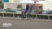 Aerolithe Schooled at the Gate for the Pegasus World Cup Turf on January 23rd, 2019