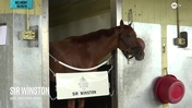 Sir Winston Settles Into Belmont Park Ahead of a Start in the Belmont Stakes