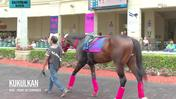 Kukulkan Schooled in the Paddock at Gulfstream Park on January 24th, 2019
