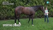 Sporting Chance Grazed After Stretching His Legs at Pimlico Race Course on May 15th, 2018