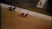 Historic Races: Secretariat Wins the 1973 Kentucky Derby