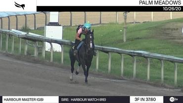Harbour Master Worked 3 Furlongs in 37.60 at Palm Meadows on October 26th, 2020