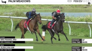 Mrs Frankel (Outside) and Sleek Lynx Worked 5 Furlongs in 59.55 at Palm Meadows on February 23rd, 2021