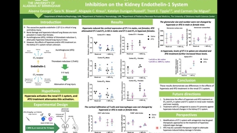 Thumbnail for entry #14- Sex Differential Effects of Hyperoxia and Thioredoxin Reductase-1 Inhibition on the Kidney Endothelin-1 System