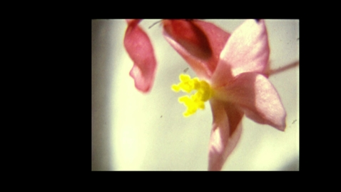 Thumbnail for entry 6727 - Film of a flower