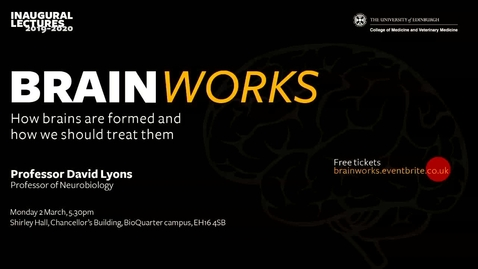 Thumbnail for entry Brainworks: How are brains formed and how should we treat them