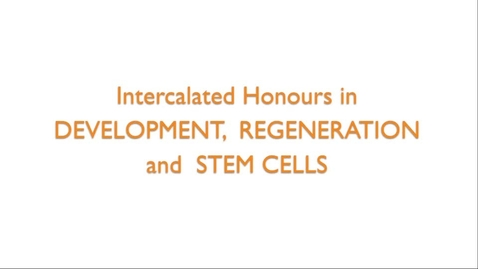 Thumbnail for entry Intercalated Honours in Development, Regeneration and Stem Cells