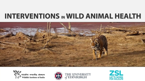 Thumbnail for entry Interventions in Wild Animal Health