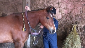 Thumbnail for entry Horse Handling: Bridle